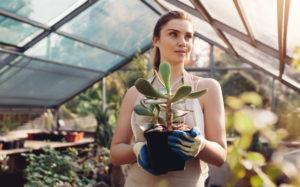 Créez un jardin d'hiver dans votre véranda